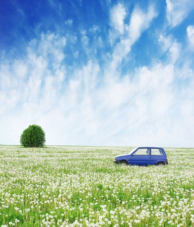 many windows: Blue little car in the middle of wide field with dandelions