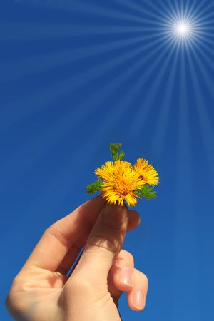 Flower in hand under sunlight photo
