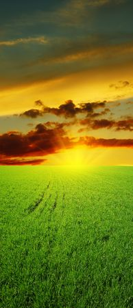 Sunset over green field photo