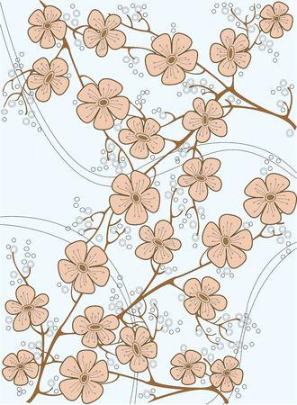 Japan cherrys flowers photo