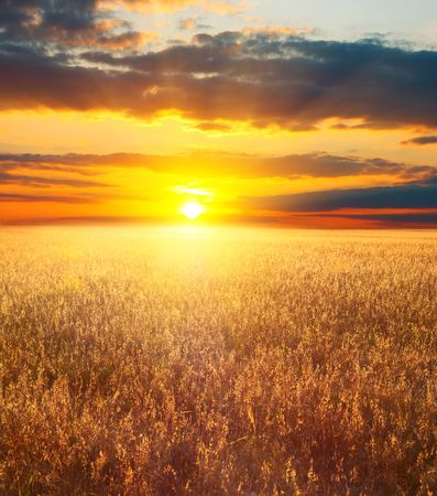 Sunset in field Stock Photo - 5862339