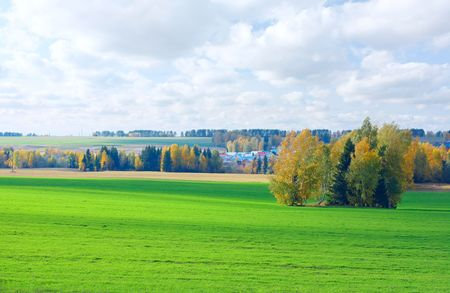 Autumn trees and meadow with green lush grass photo