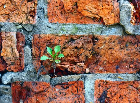 Green grass in wall photo