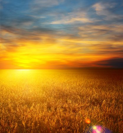 Sunset over field with wheat photo