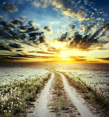 Road in field with dandelions under cloudy sunset light Stock Photo - 6444216