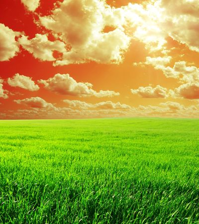Meadow with green grass and red abstract sky with clouds Stock Photo - 6444698
