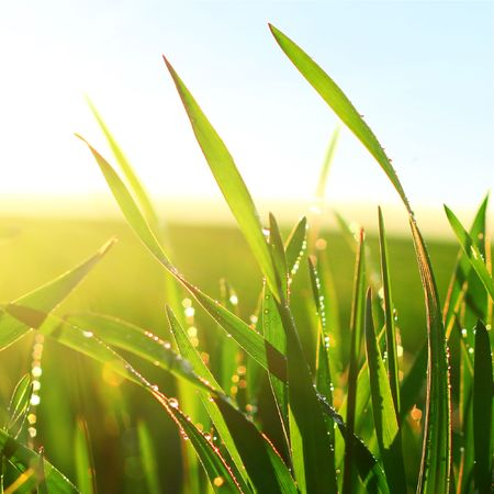 Green wet grass blue sky and sunlight photo