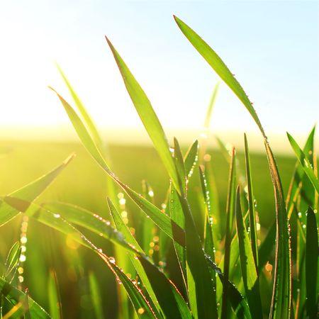 fresh morning: Green wet grass blue sky and sunlight