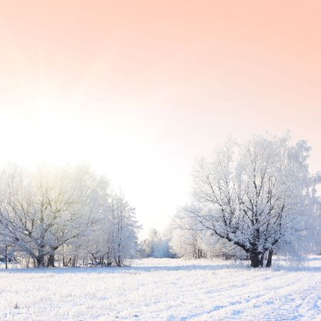 sinlight: Frozen trees and pink sky with sinlight Stock Photo