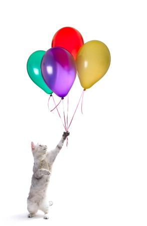 raised hand: Playfull cat with raised hand and heap of colored balloons