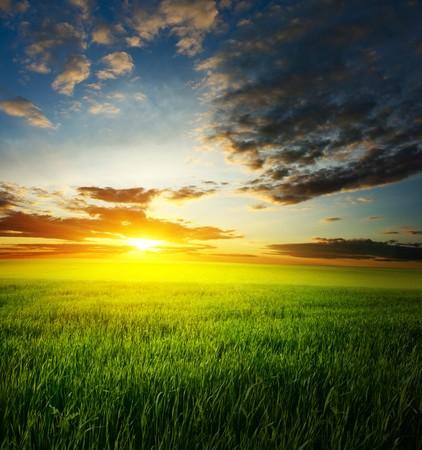 erde gelb: Sonnenuntergang �ber Feld mit gr�nem Gras