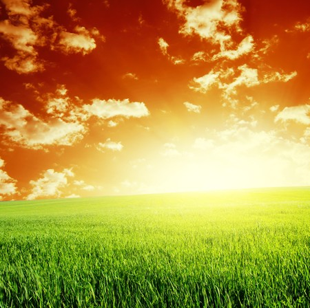 Green meadow and abstract red sky with clouds Stock Photo - 6923430