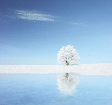 Alone frozen tree with reflection photo
