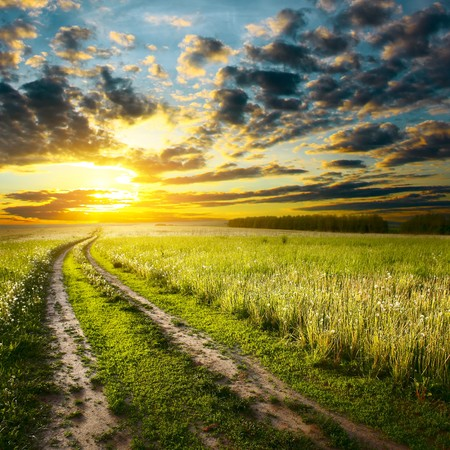Road in field under sunset light Stock Photo - 6922774