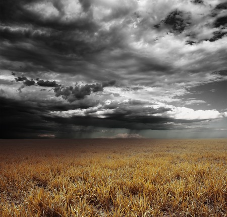 storm: Storm clouds with rain over meadow with yellow grass