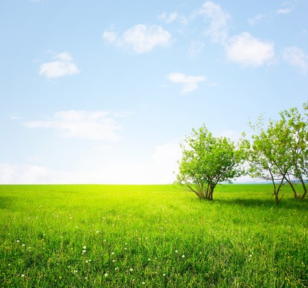 Meadow with green grass and trees and sunlight photo