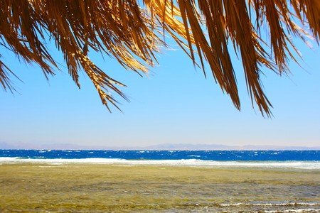 Coastline of Red sea with clear blue sky and dry palm branches Stock Photo - 6923365