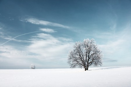 Frozen tree and blue sky with clouds Stock Photo - 6923351