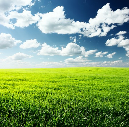 Meadow with green grass and blue sky with clouds Stock Photo - 7112837