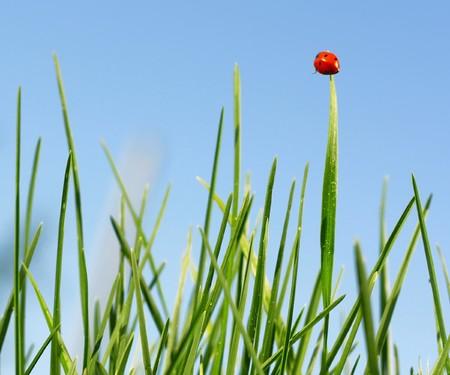 Red ladybird sitting on green grass blade Stock Photo - 7112123