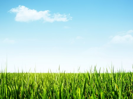 Green grass and clear blue sky with rare clouds photo