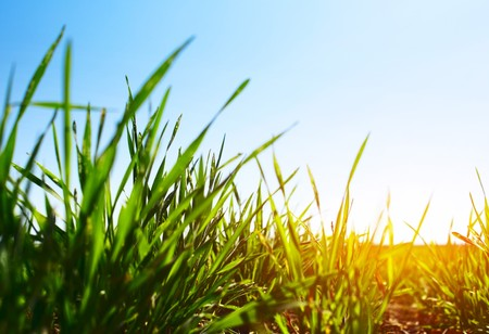 Green grass and blue clear sky with sunlight Stock Photo - 7112212