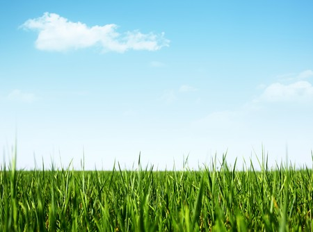 Green grass and clear blue sky with rare clouds Stock Photo - 7112478