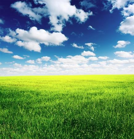 雲と青い空と緑の草の牧草地