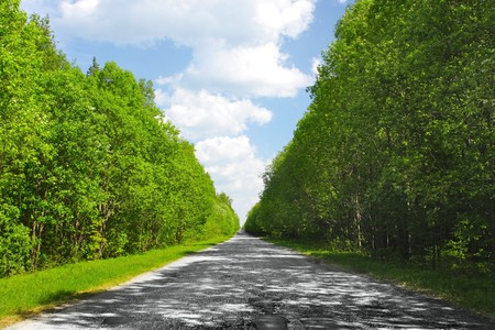 Asphalt road with green trees on sides photo