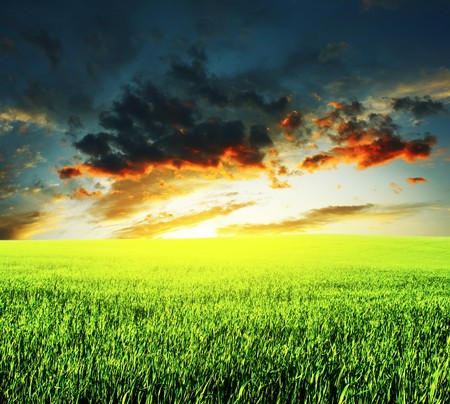 rowth: Meadow with green grass and sunset clouds