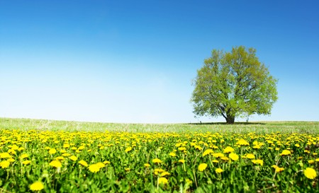 Spring meadow with flowers and alone tree with clear blue sky photo