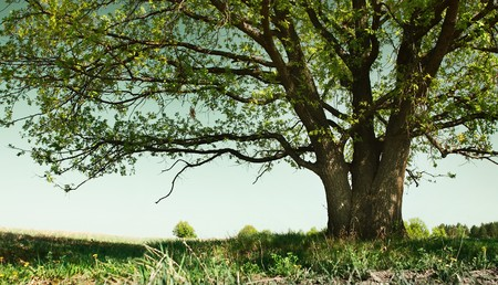 tall grass: Big tree with branches and land with herbs Stock Photo