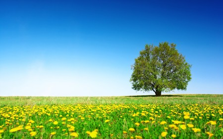 Green meadow with flowers and alone tree over clear blue sky background photo