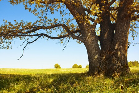 Autumn tree with leaves and dry grass and clear blue sky photo
