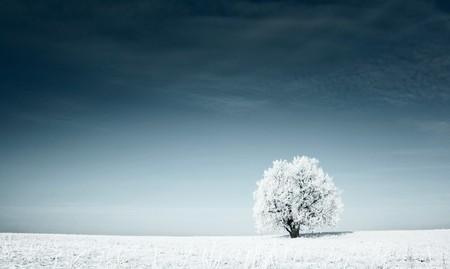paisaje: Solo árbol congelado en campo cubierto de nieve y cielo azul oscuro