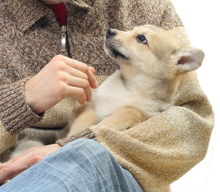 cropped shots: Little dog in strong mens hands Stock Photo