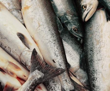 Heap of fish photo