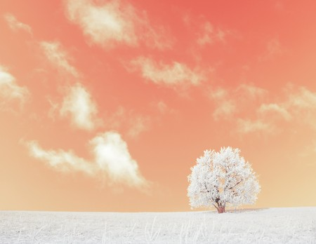 Alone frozen tree under pink abstract sky with clouds  Stock Photo - 7297296