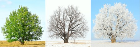 Sesonal changes of the same tree photo