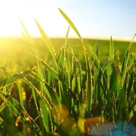 Green wet grass blue sky and sunlight Stock Photo - 7298802