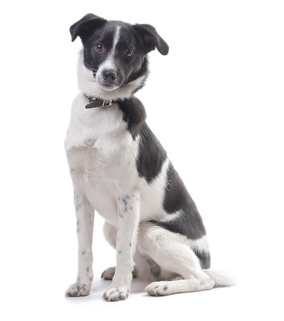 Mongrel cute dog looking to a camera isolated on white Stock Photo - 7294021