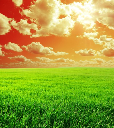 Meadow with green grass and red abstract sky with clouds Stock Photo - 7296745