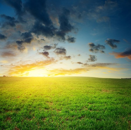 Sunset over meadow with green grass photo