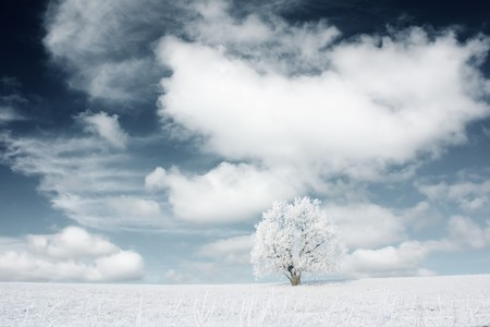 Alone frozen tree with fluffy clouds on blue sky Stock Photo - 7294075
