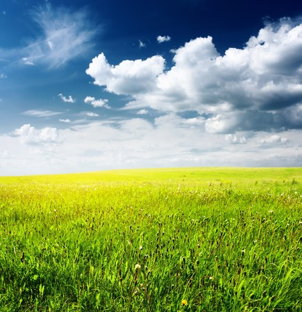 Meadow with wild herbs and blue sky with clouds photo