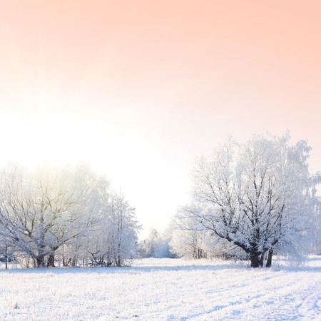 snowy field: Frozen trees and pink sky with sinlight Stock Photo