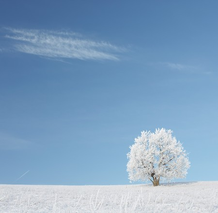 Alone frozen tree and cloud on blue sky Stock Photo - 7297541