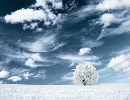 snowstorm: Alone frozen tree and clouds on blue sky Stock Photo