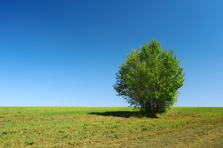 Alone green tree on meadow and clear blue sky photo