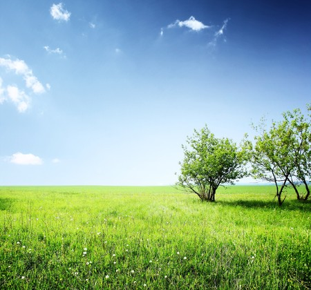 grass field: Meadow with green grass and group of trees under blue sky with clouds Stock Photo